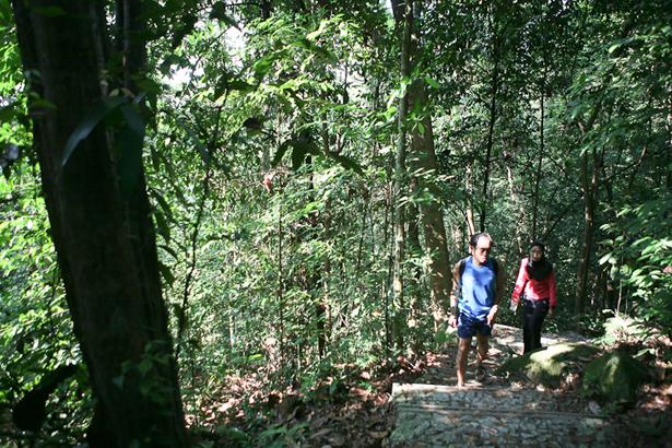 Bukit-Timah-Nature-Reserve-1